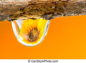 gota de agua, flor