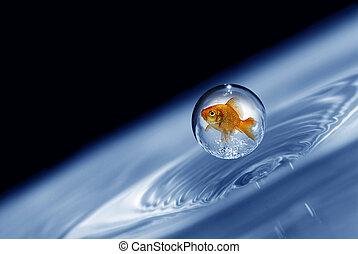 gotita, goldfish, atrapado