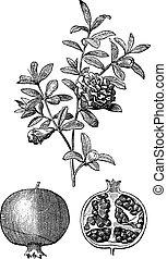 grabado, doble, granada, fruta, vendimia, flores