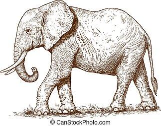 grabado, ilustración, elefante