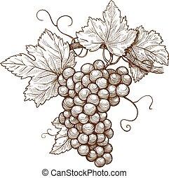grabado, uvas, rama