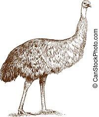 Grabando avestruz Emu