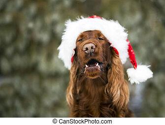 Gracioso perro navideño