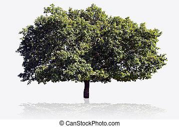 Gran árbol