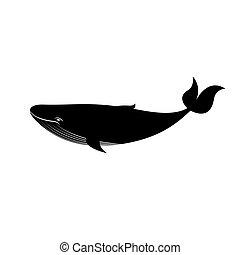 Gran ballena blanca y negra, ilustración vectorial