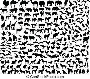 Gran colección de animales diferentes