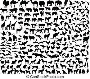 Gran colección de diferentes animales