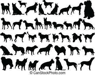 Gran colección de perros - Vector