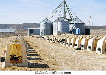 Gran granja lechera