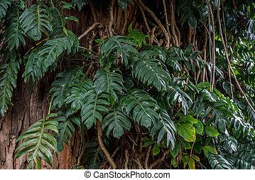 Gran hoja verde de la planta Monstera