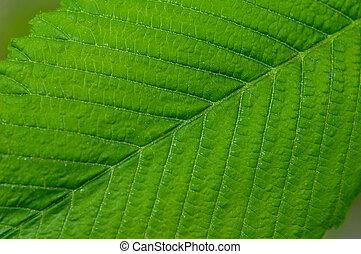 Gran macro de hojas verdes