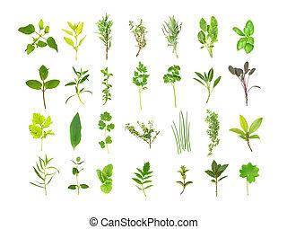 Gran selección de hojas de hierbas