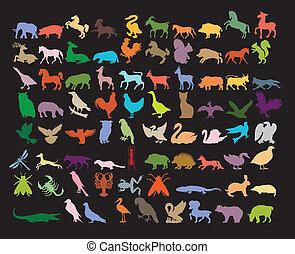 Gran variedad de animales.