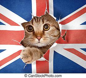 grande, arriba, británico, gato, mirar, bandera, papel, por, agujero, gran bretaña