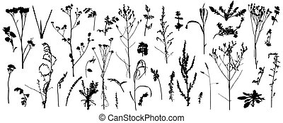 grande, vector, salvaje, silhouettes., malas hierbas, plantas, conjunto, illustration., descubierto