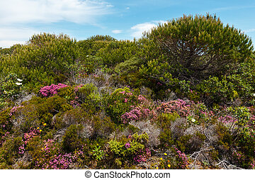 Grandes flores de azalea silvestres no lejos de la costa atlántica.