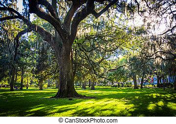 Grandes robles y musgo español en forsyth Park, Savannah, Geor