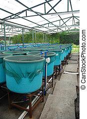 Granja de acuicultura agrícola