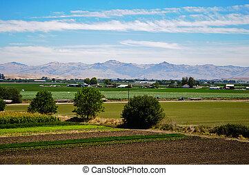 Granja de agricultura en California