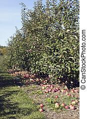 Granja de manzana
