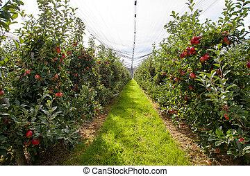 Granja de manzanas orgánicas