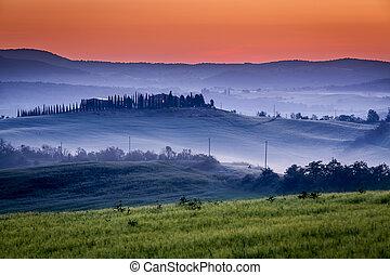 Granja de olivares y viñedos en niebla al amanecer
