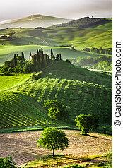 Granja de olivares y viñedos