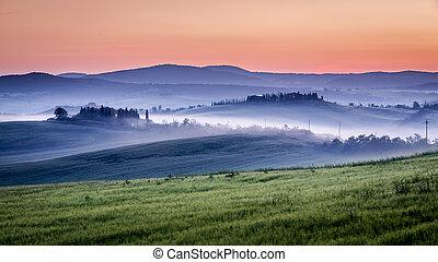 Granja de olivos y viñedos en la mañana nublada