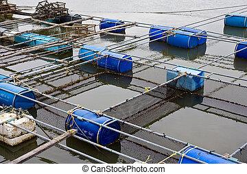 Granja de pescado
