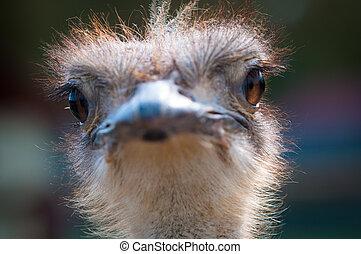 Granja de verano de avestruz en Rusia