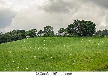 Granja de verano en Escocia