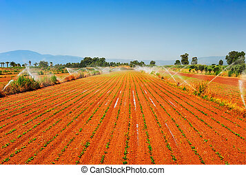Granja irrigada