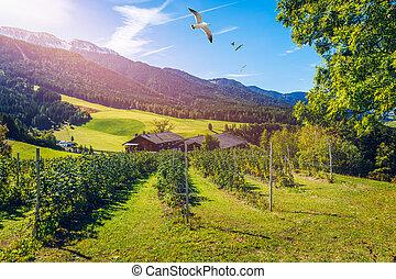 granja, italia, campo, paisaje, azul, italy., farmhouse., rural, aldea, village., verano, cielo, escénico, day.