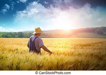 Granjero caminando por un campo de trigo