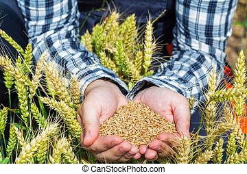 Granjero con granos en las manos en el campo de trigo