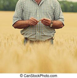 Granjero con trigo en las manos. Campo de trigo en el fondo.