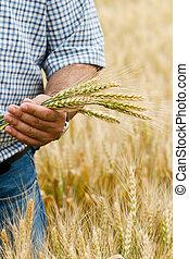 Granjero con trigo en las manos.