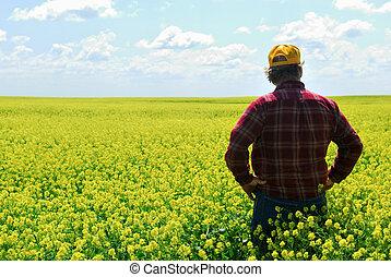 Granjero en la cosecha de canola
