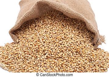 grano, bolsa, trigo, dispersado