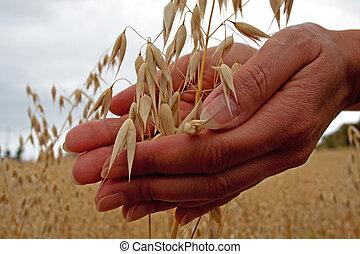 grano, tenencia, granjero