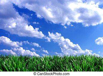 Gras verdes con cielo azul