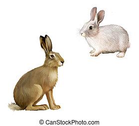 gris, sentado, hare., aislado, ilustración, conejo, blanco