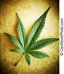 grunge, dof., superficial, cannabis, plano de fondo, hoja