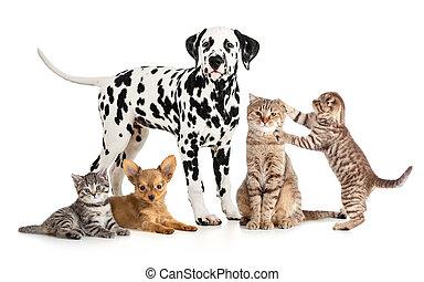 grupo, collage, veterinario, aislado, petshop, mascotas, animales, o