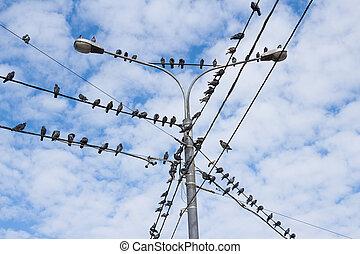 Grupo de aves