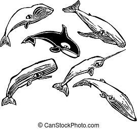 Grupo de ballenas