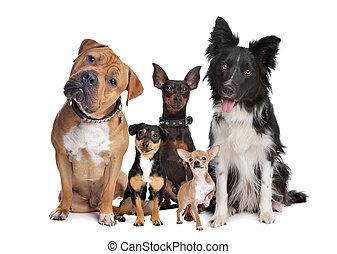 Grupo de cinco perros
