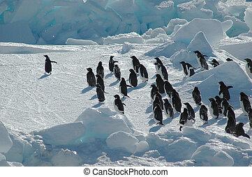 Grupo Pingüino con líder