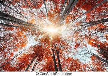 Hacia arriba de vista de árboles de otoño coloridos en el bosque