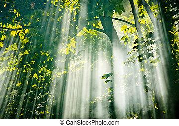 Hada luz del sol en el bosque